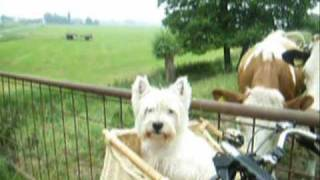 Cookie A Westie Meeting Lovely Ladies In The Nature 犬