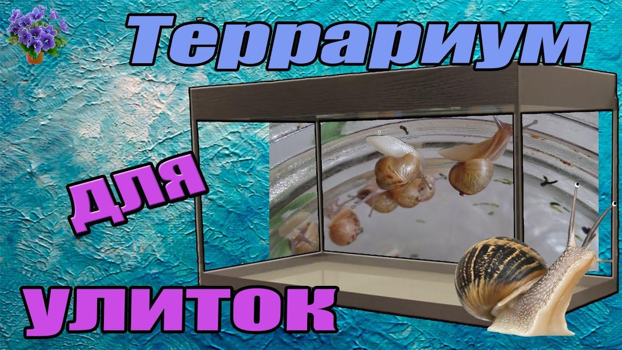 💗Виды улиток ахатин/архахатин/древесников🌟 3 в 1🤔☺   - YouTube