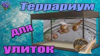 Download Африканская гигантская улитка ахатина (Achatina ) обустройство террариума Mp3 and Videos