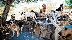 Topanga Pet Resort #1 Dog Training, Dog Boarding, and Dog Daycare in Los Angeles, CA
