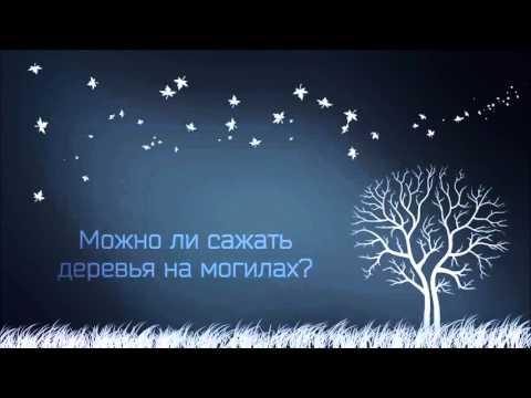 Вопрос: Какие посадить кусты или деревья на могиле, чтобы не выкопали воры?