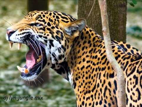 dj lyn-jungle mix.mp3.wmv