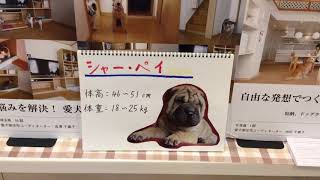 みなさん、こんにちは。セラフ榎本愛犬家住宅です。 今回は、シャーペイ...