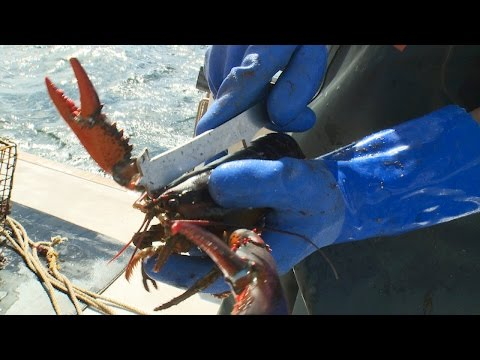 These Illegal Lobster Traps Could Threaten New Hampshire's Lobster Population