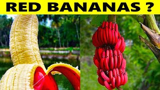 15 Most Unique Fruits You've Never Heard Of