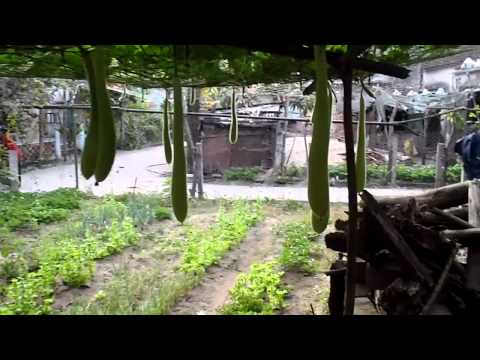 Organic vegetables Homestay Bai Huong Cu Lao Cham Hoi An Vietnam Karma Waters