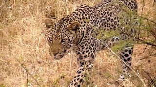 Madikwe Game Reserve - South Africa