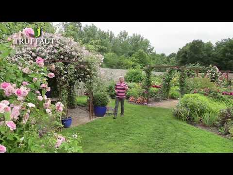 chaine de jardin comment faire une bouture d 39 hortensia doovi. Black Bedroom Furniture Sets. Home Design Ideas