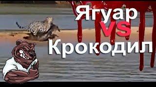 Опасные животные. Дикие животные. Ягуар нападает на крокодила