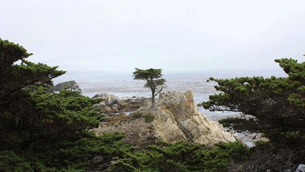 Lone Cypress On The 17 Mile Drive In