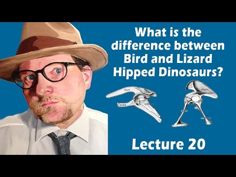 What is the difference between bird and lizard hipped dinosaurs?