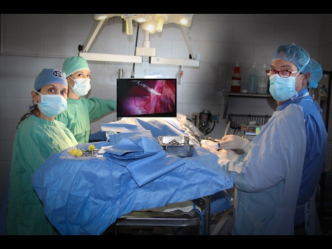 Laparoscopic Surgery For Veterinarians