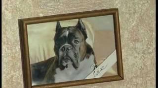 Гостиница для собак и кошек ZOOHOTEL Сюжет ТВЦ  июнь 2011 г.