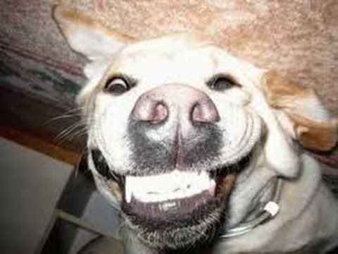 16 Best Smiling Dog Collection images in 2013 | Funny …
