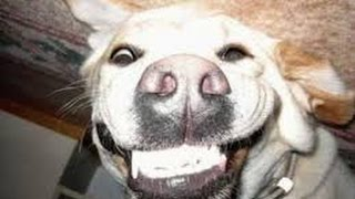 Funny smiling and chattering cats and dogs - Funny and cute animal compillation