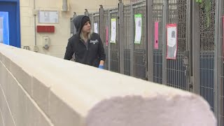 VIDEO: Dog dies at Mesa shelter due to bacterial infection