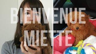 Gambar cover ARRIVEE DE MON CHIOT A LA MAISON | Poodle toy (2 ½ months)