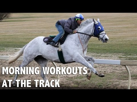 Morning workouts at the track