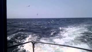 Курильские Острова - Видео №9 - вокруг бакланы)))(У меня это первый такой опыт, потому снимаю много, так как кажется все это интересно))), 2015-07-21T00:18:57.000Z)