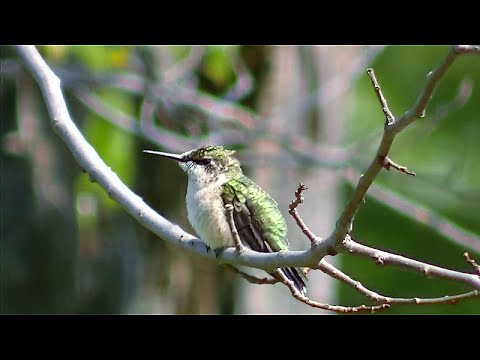 Stunning Bird & Nature Video ! 100's of Birds Caught on Camera !