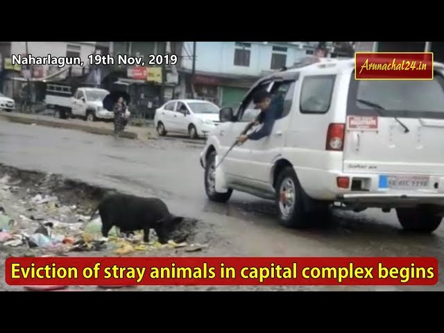 Itanagar- Eviction of stray animals in capital complex begins
