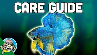 Betta Fish Care Guide - Betta Fish Tanks - Aquarium Co-Op