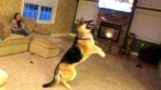 Dog Attacks Quadcopter!