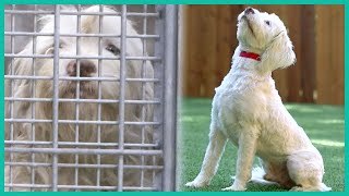Saving a Tibetan Terrier from the Pound | Lucky Dog