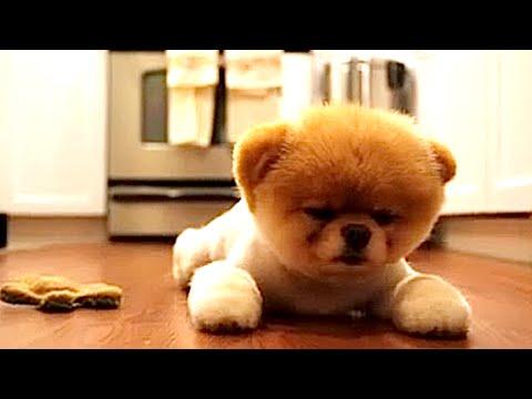 guinness world record worlds cutest dog