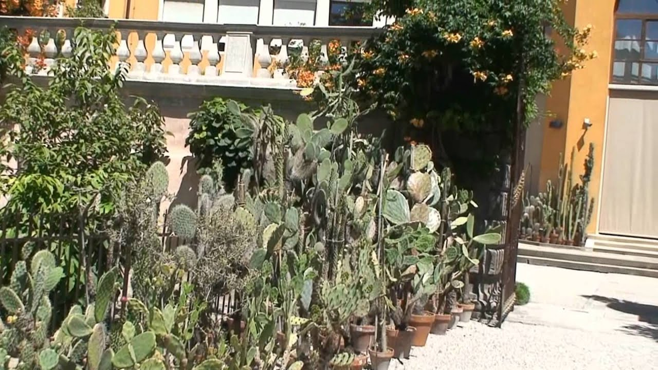 L orto botanico dell università di padova youtube