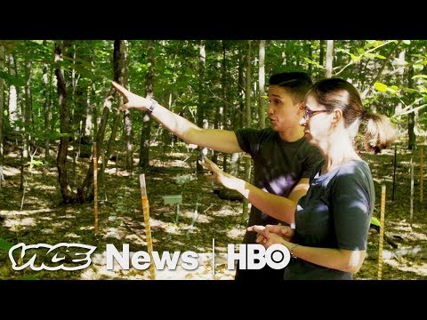 What An Artificially Heated Forest Tells Us About Climate Change (HBO)
