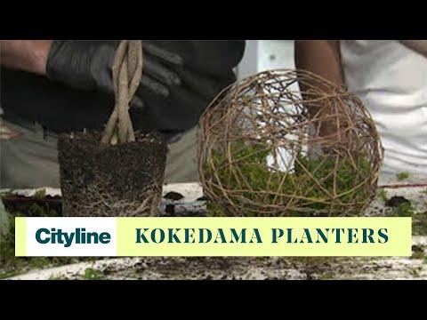 DIY kokedama planters