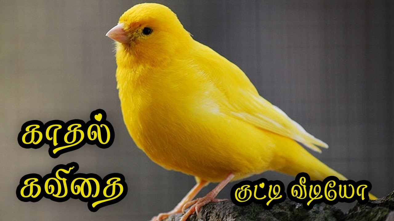 Love Quotes In Tamil Kathal Kavithai Tamil Whatsapp Video 040