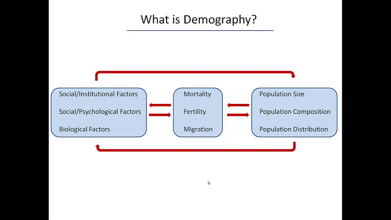 What is demography 99