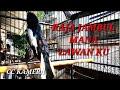 Pancingan Kacer Raja Jambul Ngotot Cari Lawan Dipastikan Bikin Kacer Lain Ikut Gacor  Mp3 - Mp4 Download