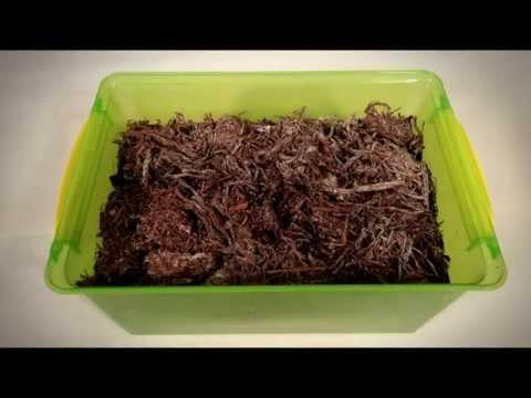 видео: Мини-грибница - выращивание шампиньонов в домашних условиях