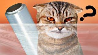 КОРОЧЕ ГОВОРЯ кот VS Невидимая стена