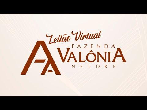 Lote 45   Troiano FIV da Valônia   JAA 5807 Copy
