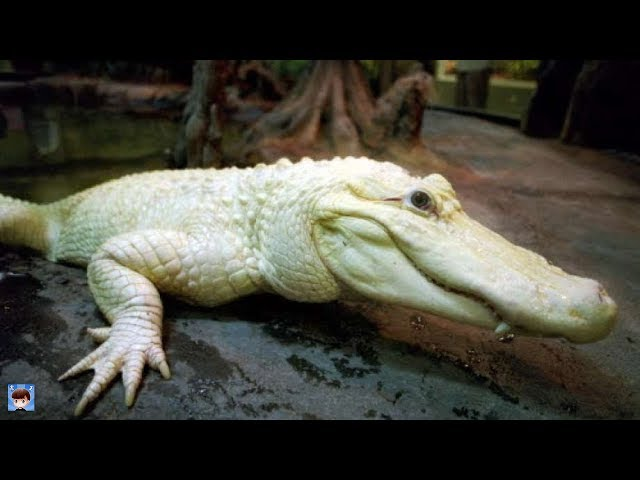 如果你找到這些生物就發達了!10種地球上最貴的動物