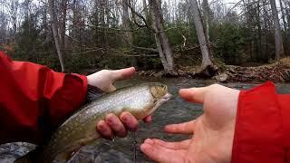 Early Season Trout Fishing