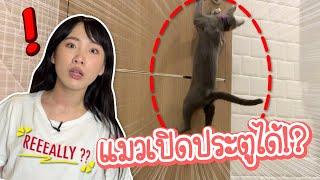แมวเปิดประตูบ้านเองได้!?