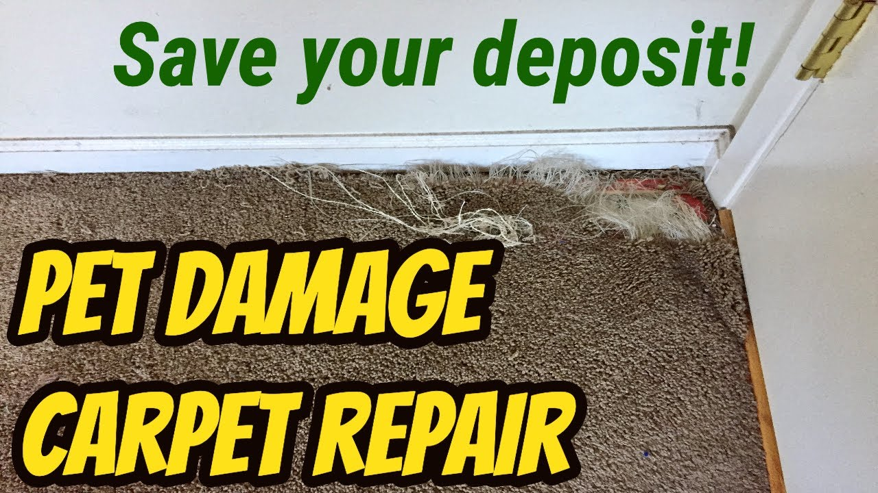 How To Repair Damaged Carpet From Pets Tcworks Org