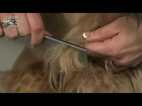 Dog Grooming How To Remove Mats In Your Dog S Fur