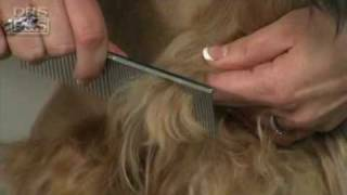 How To Remove Mats In Your Dog's Fur (drsfostersmith)