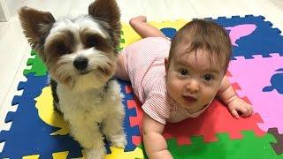 Ребенок и собака в доме.Наша история.