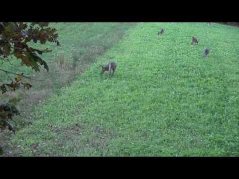 Killer's Instinct Outdoors Bow Hunt