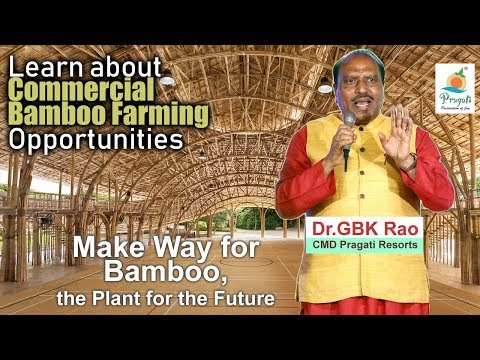 Learn about  Commercial  Bamboo Farming  Opportunities||GBK Rao||Pragati||YES TV