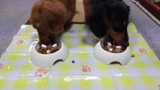 ロイヤルカナン犬種別ウェットフードモニターの実食!