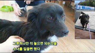 유기견보호소 소녀의 소식은....