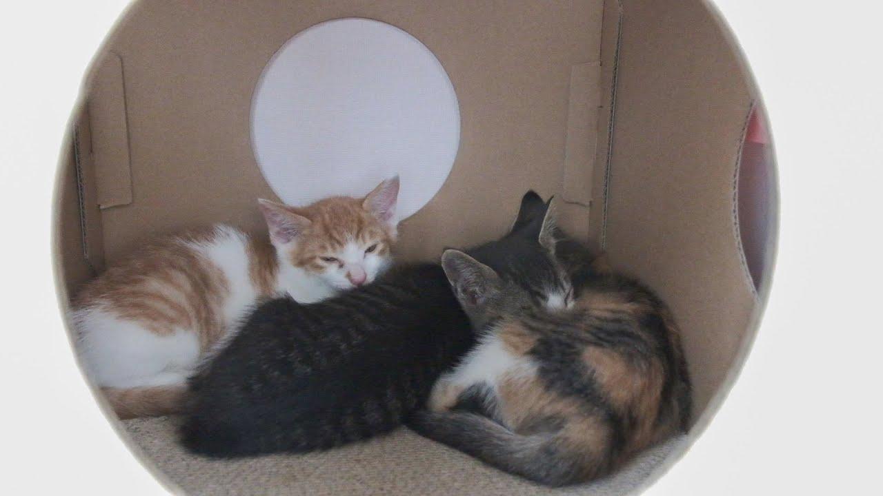 집을 잃고 돌아갈 곳이 없는 아기 고양이들에게 기적이 일어날까요?